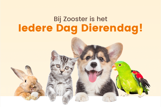 Zooster l Dieren dag l MondoMarketing l Performance Driven Digital Marketing Bureau