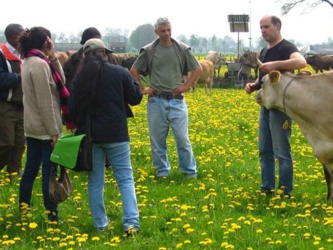 Dutch Farm Experience
